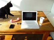 mayra computer cat
