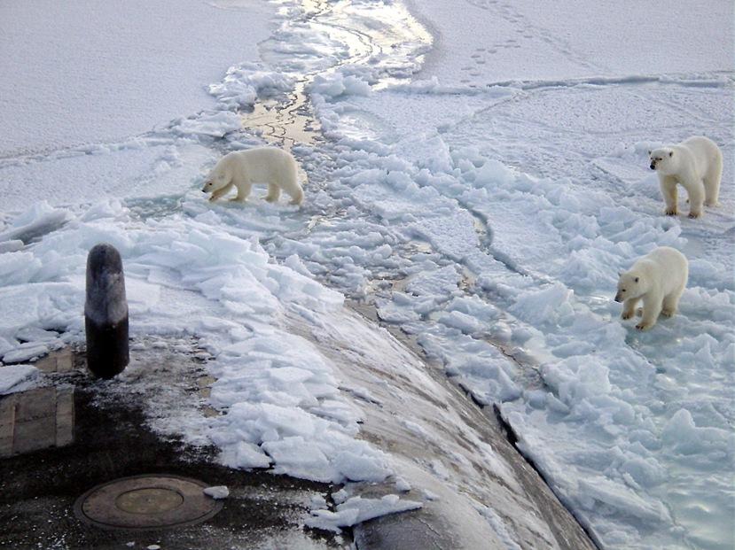 Polar_bears_near_north_pole.jpg